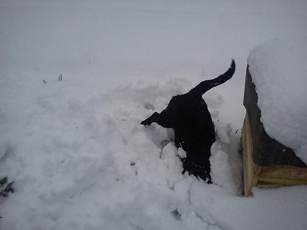 Что же там под снегом