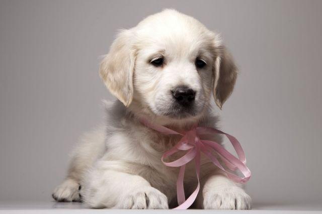 Wendy Monning Smile  (Венди Моннинг Смайл)  Девочка розовая ленточка, 2 месяца