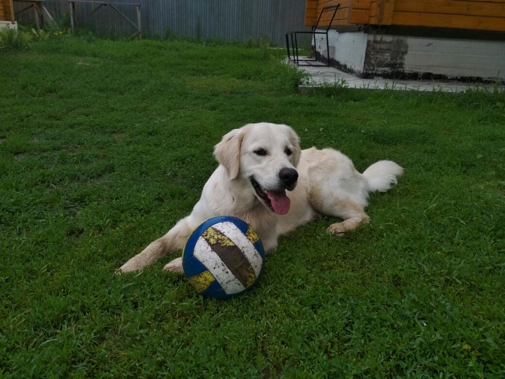 Любимая игра Футбол