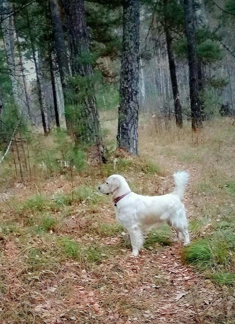 Прогулки по осеннему лесу прекрасны!