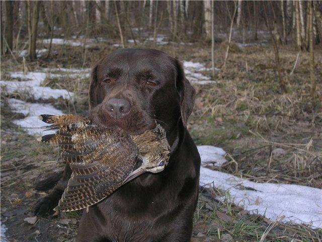Первая весенняя охота 2011 год