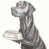 Палевые и черные щенки в Пятигорске - последнее сообщение от Зоя