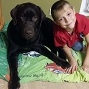 Шоколадный кобель лабрадора ищет семью - последнее сообщение от Надежда Борзых