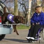 Лабрадор-помощник инвалиду.Вопрос-ответ